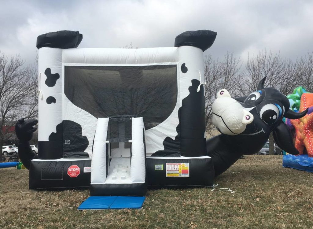 Cow Belly Bounce